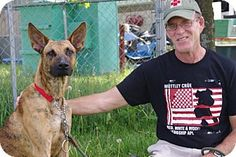 Elyria, OH - Great Dane/German Shepherd Dog Mix. Meet Reese-Prison Dog, a dog for adoption. http://www.adoptapet.com/pet/11477614-elyria-ohio-great-dane-mix