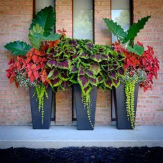 Outdoor Pots That Will Give You the Green Thumb - Beautiful flowers for your porch and patio. Lots of great landscaping and home decor ideas using live plants.