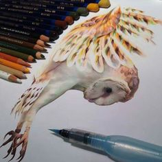 Realistic Drawings Made With Colored Pens And Markers By Karla Mialynne