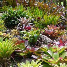 bromeliad garden bed - Bing images