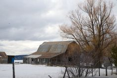 Gray barn and tree in the snow. Learn more about printing your high quality photography at http://prolabdigital.com !