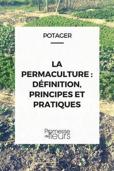 Permaculture et jardin potager, on en parle ? - Gardening Tips