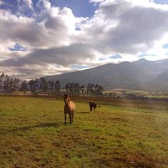 Bocadito1 @ Hacienda Cochauco http://haciendacochauco.com  #food #ecuador #agriturismo