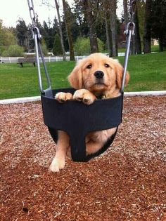 I am ready to be pushed. | 61 Times Golden Retrievers Were So Adorable You Wanted To Cry