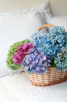 My hand-out flower is the hydrangea ... any color or color combination!