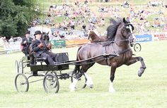 Photo Archive Royal Welsh Show Driving - Wagons - Stallion 2013 : Rainhill Welsh Cobs