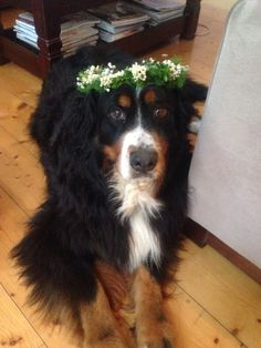 Ruby and her floral crown