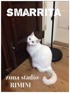 RICEVIAMO E PUBBLICHIAMO:  da Alessia Boldrini: 20 febbraio 2016   SMARRITA gatta femmina sterilizzata tutta bianca con gli occhi verdi noi non l'abbiamo più trovata da giovedì mattina. Zona stadio di RIMINI, non si allontanava mai molto da casa.TEL-338 1517575