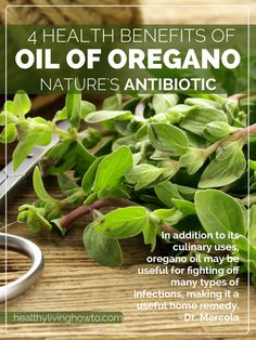 Oil of Oregano: 4 Health Benefits of Nature's Antibiotic - Healthy Living How To Natural Medicine, Herbal Medicine, Natural Cures, Natural Healing, Herbal Remedies, Health Remedies, Health Benefits, Health Tips, Health Care