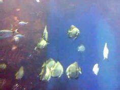 Oceanarium WROCŁAW Painting, Painting Art, Paintings, Painted Canvas, Drawings