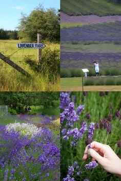 Sweet Inspirations from Pelindaba Lavender Farm on San Juan Island