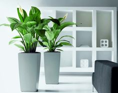Cubico Planters from Evergreen Direct