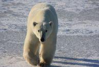 Voyage polaire - croisière polaire - Grand Nord Grand Large - GNGL