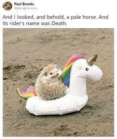 And I looked, and behold, a pale horse! And its rider's name-And I looked, and behold, a pale horse! And its rider's name was Death…. Animal Jokes, Funny Animal Memes, Funny Animal Pictures, Funny Memes, Funny Unicorn Memes, Funniest Memes, Funny Photos, Cute Little Animals, Cute Funny Animals