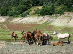 Porto de Sanabria, Zamora, Spain Horses, Animals, Naturaleza, Scenery, Animales, Animaux, Horse, Animal Memes, Animal