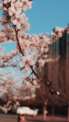 Wallpaper Nature Flowers, Beautiful Flowers Wallpapers, Beautiful Nature Wallpaper, Scenery Wallpaper, Flowers Nature, Flower Wallpaper, Cherry Blossom Wallpaper, Home Wallpaper, Dried Flowers
