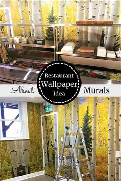 Watch this Aspen tree wallpaper on CHCH TV and see it on real customer's walls. The removable wallpaper goes up quickly and easily and peels off in minutes. Tree Wallpaper Room, Birch Tree Wallpaper, Forest Wallpaper, Birch Tree Mural, Forest Mural, Photo Mural, Aspen Trees, Autumn Forest, Photo Tree