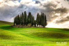 Cypress grove by mic_agostinelli