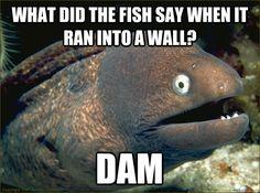 bad joke eel...