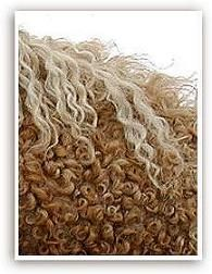 North American Curly horses have been proven to be hypo-allergenic.