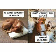 New Memes En Espanol Dormir Ideas Chat Facebook, Funny Jokes, Hilarious, Haha, Spanish Jokes, Funny Spanish, Memes In Real Life, Humor Grafico, New Memes