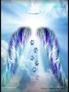 To all the fur babies who have gone to the rainbow bridge ~ Love you always. Mis… To all the fur babies who have gone to the rainbow bridge ~ Love you always. Miss you always. See you again someday. Nature Iphone Wallpaper, Wolf Wallpaper, Photo Wallpaper, Wallpaper Ideas, Computer Wallpaper, Microsoft Wallpaper, Dog Quotes, Animal Quotes, Souvenir Animal
