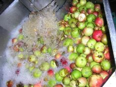 Scottish apple jacuzzi - getting good and clean before being turned into cider!