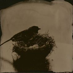 """4""""x4"""" Wet Plate Collodion Tintype by: Angie Pember Brockey"""