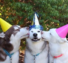 .  Birthday party.  Photo By @husky_quartet.