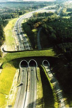 Hayvan Geçidi Köprüsü - Hollanda