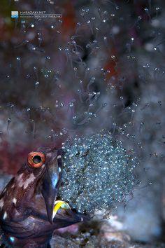 Shigeru Harazaki - an amazing shot!  Absolutely love this!!!!!
