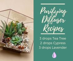 These 7 Purifying Diffuser Blend Recipes will purify the air, cleanse the atmosphere, and refresh your mind. Young Living Oils, Young Living Essential Oils, Essential Oil Diffuser, Essential Oil Blends, Esential Oils, Air Diffusers, Diffuser Recipes, Diffuser Blends, Tea Tree
