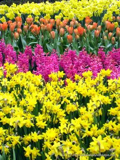 "Nice! ""Flowers in bloom at the famous Keukenhof Gardens in Holland"" #FriFotos by @A Lady in London"