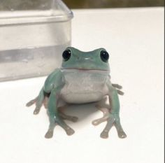 Cute Little Animals, Cute Funny Animals, Dumpy Tree Frog, Whites Tree Frog, Pet Frogs, Frog Pictures, Frog Art, Frog And Toad, Creatures