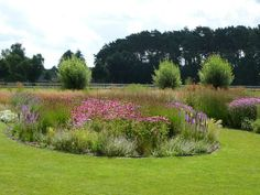 Prairietuinen Peter Ons > Home Prairie Planting, Blossom Garden, Green Life, Garden Planning, Garden Inspiration, Paths, Landscape, Outdoor Decor, Flowers