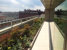 American Psychological Association (APA) Headquarters: a linear planter was installed along the walkway.  Photo Courtesy of Capitol Greenroofs.