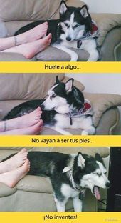 I don't even speak Spanish I'm just dying cuz of the pics Animals And Pets, Funny Animals, Cute Animals, Funny Animal Pictures, Funny Images, Funny Cute, Hilarious, Funny Spanish Memes, Dog Memes