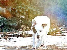 My dogs wolf like state Husky, Wolf, Pets, Animals, Animals And Pets, Animales, Animaux, A Wolf, Wolves