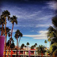 Saguaro Hotel in Palm Springs, California   16 Hotels That Are So Cool You'll Want To Stay Forever