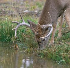 Instant Water Hole: Make a Place for a Buck to Drink—and Stick Around | Field & Stream