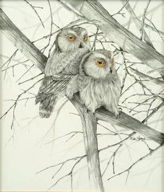 Saw-whet Owl Pencil Drawing - Picture 3 in 2D media: Mike Lofland -