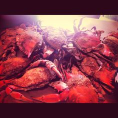The best way to eat crabs: Old Bay & lots of napkins
