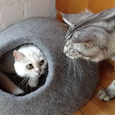 stylecats präsentiert Ihnen hochwertige Kratzbäume und andere wundervolle Katzenmöbel, deren Design nicht nur hervorragend aussieht, sondern auch optimal in Ihr Wohnumfeld passt.