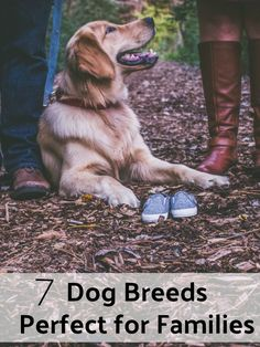 7 Dog Breeds That are Perfect for Families - BECAUSE EVERYBODY SHOULD THINK ABOUT THE RIGHT BREED or better for which breed he or she is the right person.