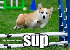 may your new year be as smooth as this Corgi :)