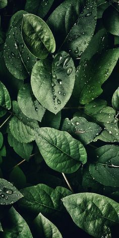 Tropical Leaves, Botanicals, Leaf Phone Wallpaper - iphone background - Best of Wallpapers for Andriod and ios Plant Wallpaper, Green Wallpaper, Iphone Background Wallpaper, Aesthetic Iphone Wallpaper, Flower Wallpaper, Nature Wallpaper, Aesthetic Wallpapers, Tropical Wallpaper, Beautiful Wallpaper For Phone