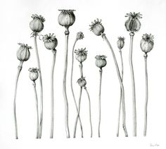 botanical illustrations black and white - Google Search