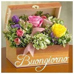 Buongiorno Fiori Good Morning Rainy Day, Good Morning Cards, Good Morning Coffee, Morning Greeting, Pretty Flowers, Silk Flowers, Italian Memes, Birthday Frames, Happy Birthday Quotes