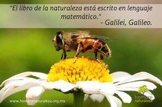 """""""El libro de la naturaleza está escrito en el lenguaje matemático.""""  Galilei, Galileo."""