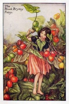 Black Bryony Flower Fairy » Flower Fairy Prints- Vintage Fairy Prints by Cicely Mary Barker for sale